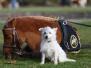 Hund und Pferd Dortmund