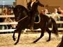 Pferdmuseum Hippomaxx Münster